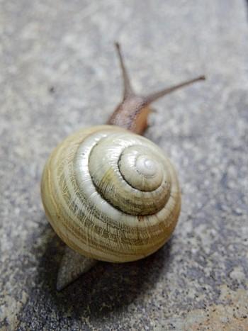 snail as jpeg