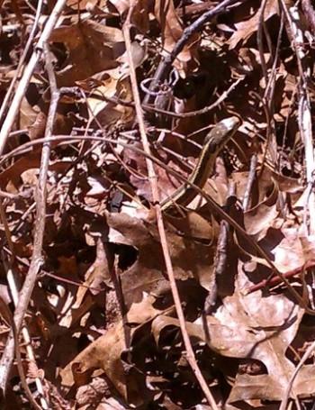 4.10.15 wisdom walk snake in leaves