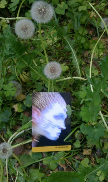 sustainability dandelion 5.30.15